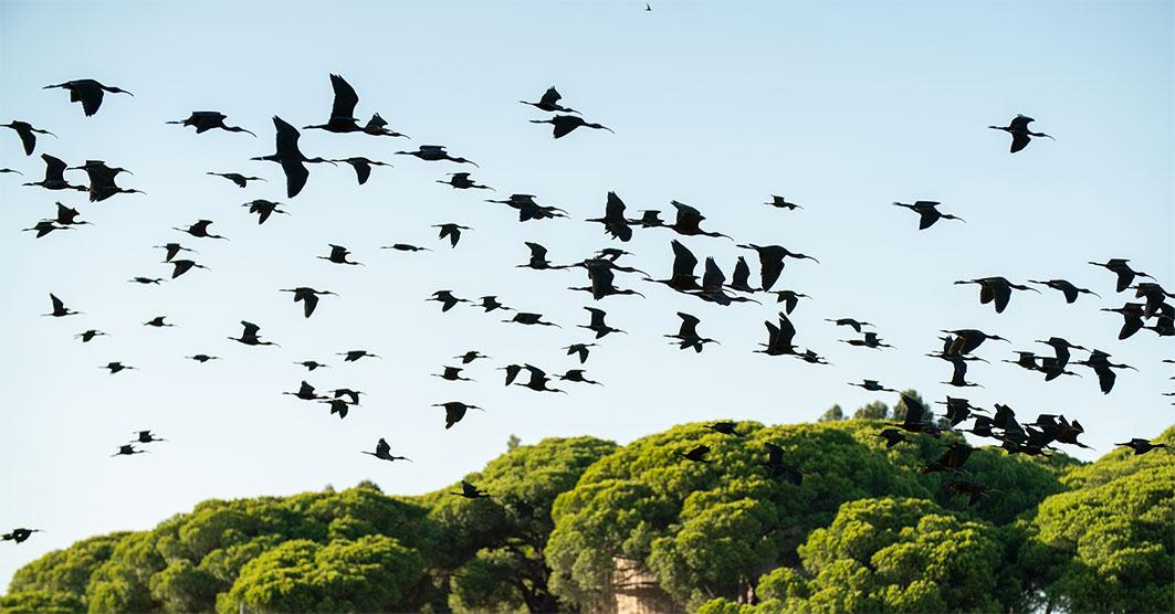 Sony camera canon lens wildlife photographer